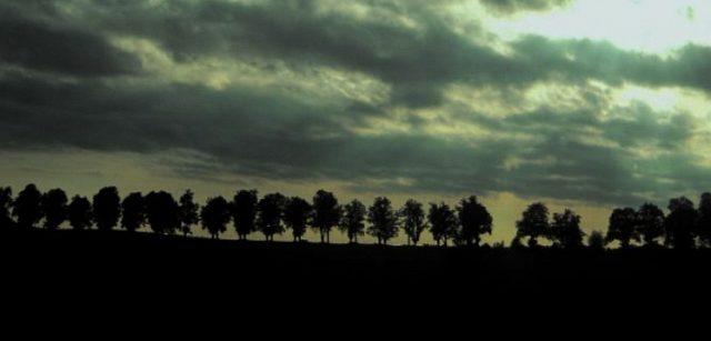 Pomozte najít nejkrásnější stromořadí