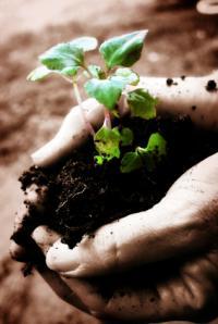 Aplikace určí rostlinu podle fotografie