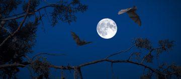 Za nočními savci do přírodní zahrady