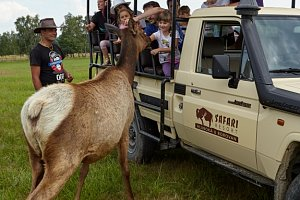 Safari Resort Hluboká u Borovan
